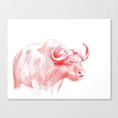Ox Canvas Print