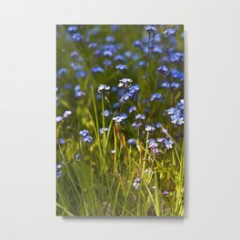 Lovely Blue Forget Me Not Flowers  Metal Print