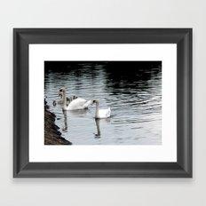 Swan & Cygnets Framed Art Print