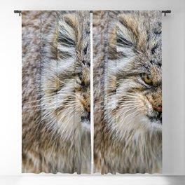 Beautiful Wonderful Furry Cat Warning Off Close Up Ultra HD Blackout Curtain