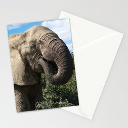 african elphant Stationery Cards