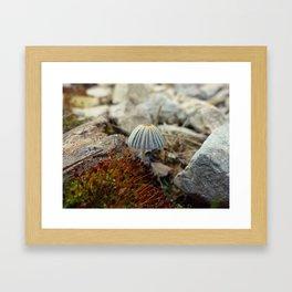Tiny Toadstool Framed Art Print
