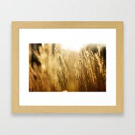 Morning Fields Framed Art Print