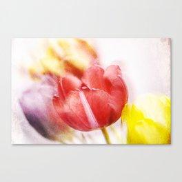 Tulip Spring Break Canvas Print