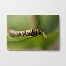 Bookworm - Monarch Caterpillar Larvae Metal Print