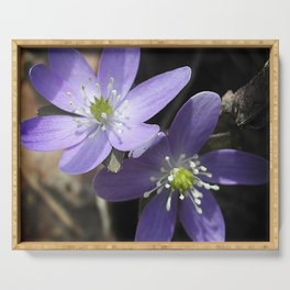 Woodland hepatica, Anemone acutiloba - a sure sign of spring Serving Tray