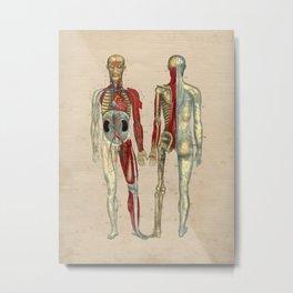 Human Artery Anatomy 1841 Print Metal Print