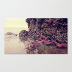 Starfish Addicted  Canvas Print