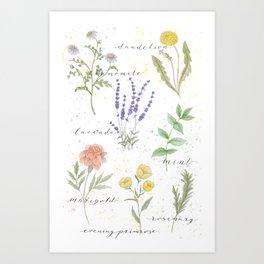 Medicinal Herbs Art Print