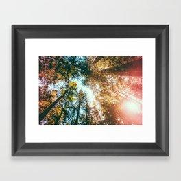 California Redwoods Sun-rays and Sky Framed Art Print