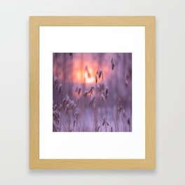 Snowy Reeds Sunset Purple Tone #decor #society6 #homedecor #buyart Framed Art Print