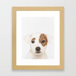 Jack Russell Puppy Framed Art Print