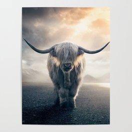 highland cattle scotland Poster