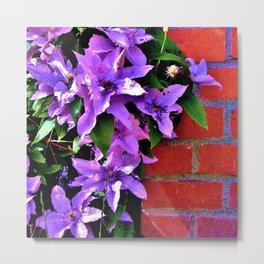 Beautiful purple flowerbush on the wall Metal Print