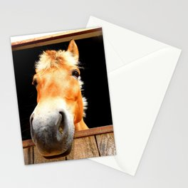 Horse Face Close Up Accentuating his Nose Stationery Cards