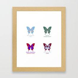 Butterflies 4 Framed Art Print