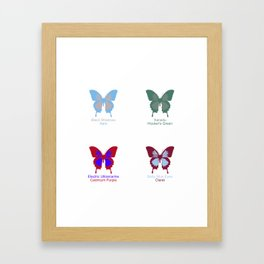 Butterflies 4 Framed Art Print