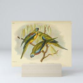 Chestnut Shouldered Grass Parrakeet Splendid Parrakeet Elegant Grass Parrakeet4 Mini Art Print