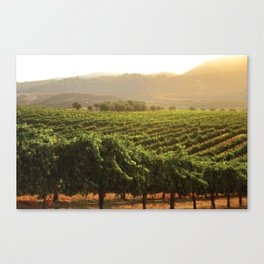 Wine Country Morning Canvas Print