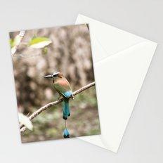 Rainforest Bird Stationery Cards