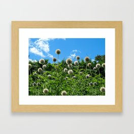 Fuzzy Pom Pom Flowers on a Grassy Hilly Slope on a Summer Day Framed Art Print
