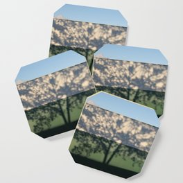 Shadow Tree on an industrial building Coaster