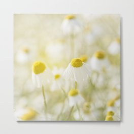 Floral Spring Meadow with Flowers Camomile and Daisies Metal Print