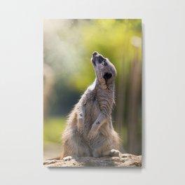 Magical meerkat Metal Print
