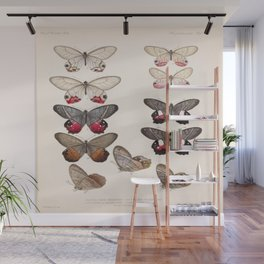 Moths And Butterfly Vintage Scientific Hand Drawn Insect Anatomy Biological Illustration Wall Mural