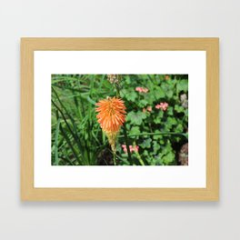 Flowers at The Sky Garden, London, 20 Fenchurch Street Framed Art Print