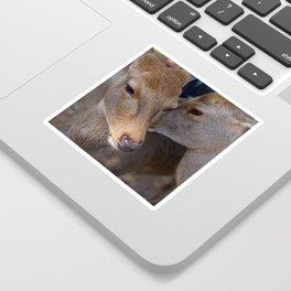 Deer Secrets Sticker