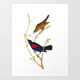 Prairie Starling Bird Art Print