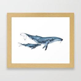 Whale & whale calf Framed Art Print