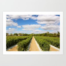 Tomato Fields  Art Print