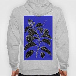 Western Nightshade (also know as Bush Tomato ) - Solanum chippendolei or Solanum coactilferum Hoody