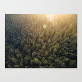 The forest from above Canvas Print