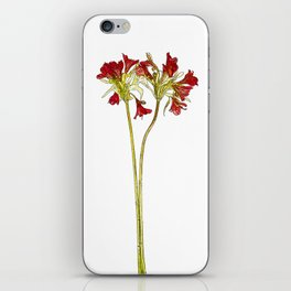 Parrot Lily Cartoon iPhone Skin