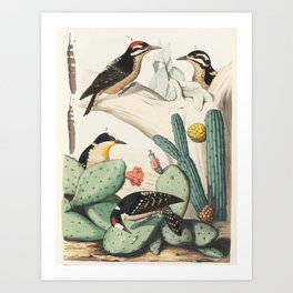 Woodpeckers And Cacti Art Print