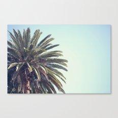 Corner Palm Canvas Print