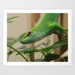 Madagascar Giant Day Gecko Art Print