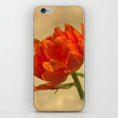 Orange Tulips iPhone & iPod Skin