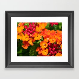 Little Cups  Framed Art Print