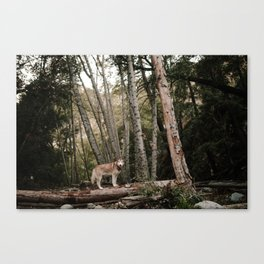 Husky in Forest Canvas Print
