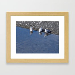 Seagulls At The Foreshore Framed Art Print