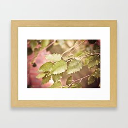 Golden Fall Leaves Framed Art Print