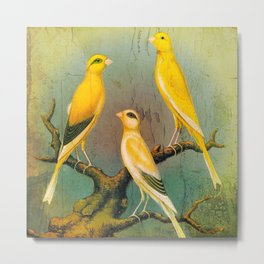 3 Yellow Canaries Metal Print