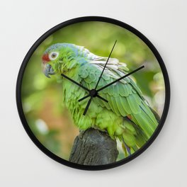 Tropical Parrot at Zoo, Guayaquil Wall Clock