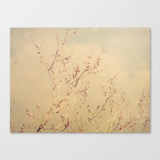 Vintage February Branches Canvas Print