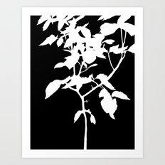 White Nature Art Print