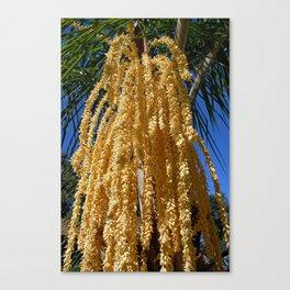 Cascading Seed Pod Canvas Print